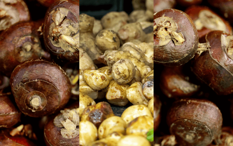Water Chestnuts Substitutes