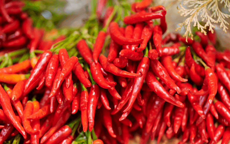 What Is Red Chili Pepper