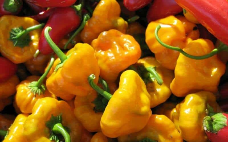 Can You Freeze Scotch Bonnet Peppers