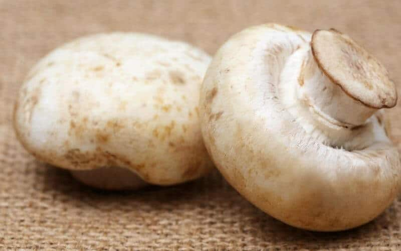 Are Gills Of Button Mushroom Edible