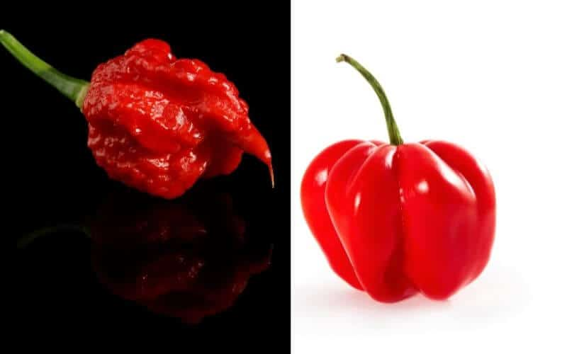 Difference Between Carolina Reaper and Habanero