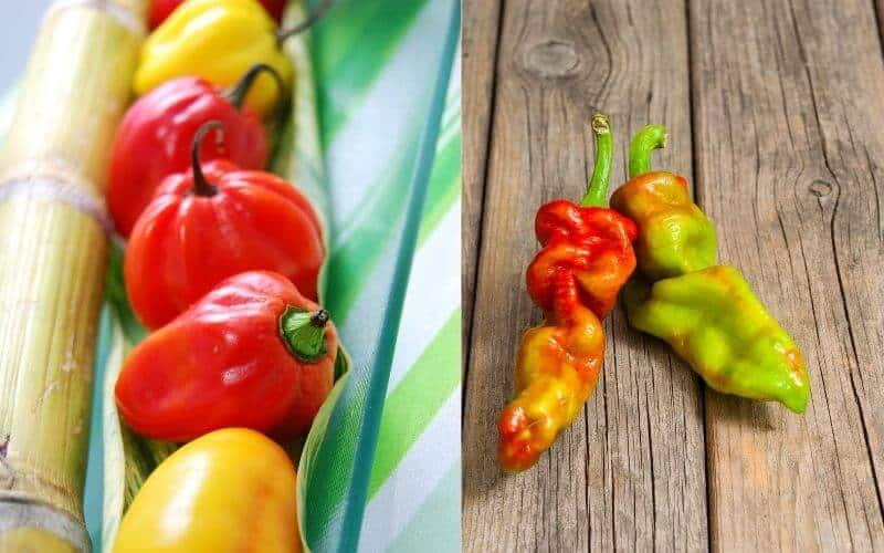 Difference between Scotch Bonnet and Ghost Pepper