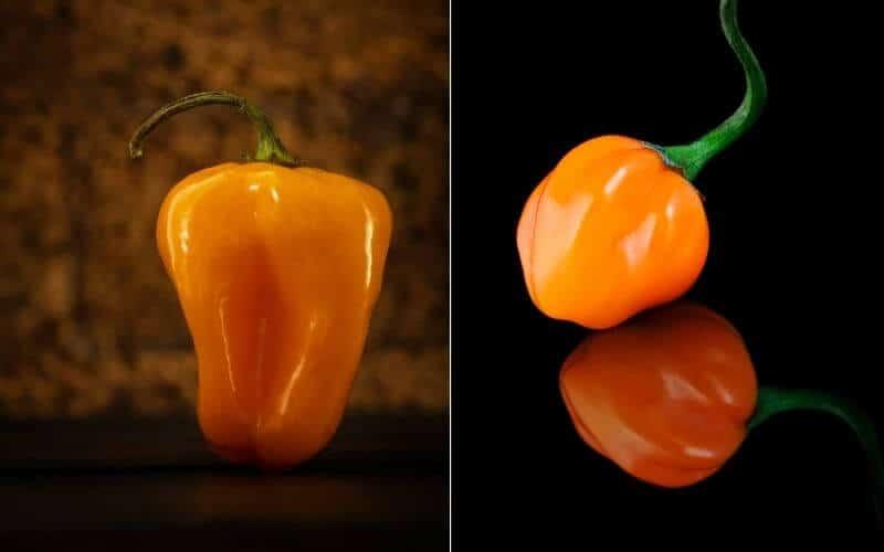 Scotch Bonnet Pepper Vs Habanero Pepper